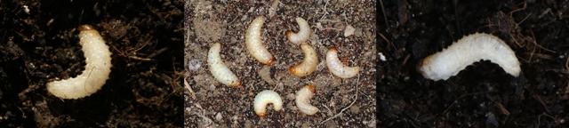 larwyopuch-horz.jpg