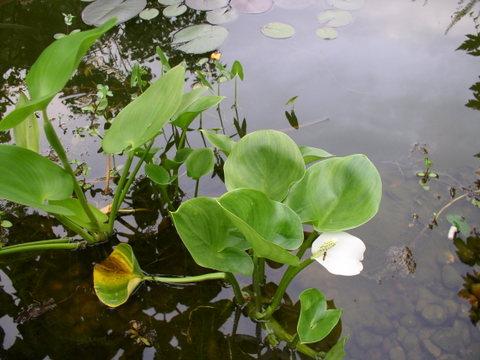 kwiaty150.jpg