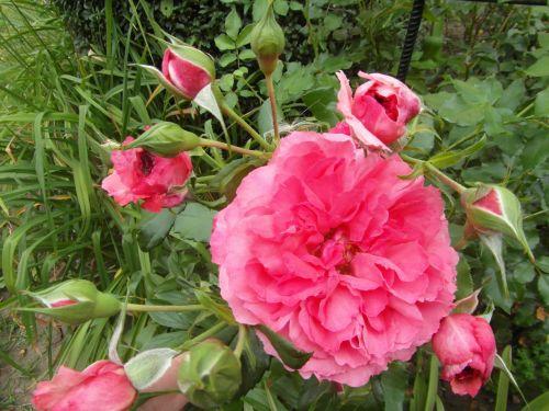 rosariumuetersen0.jpg