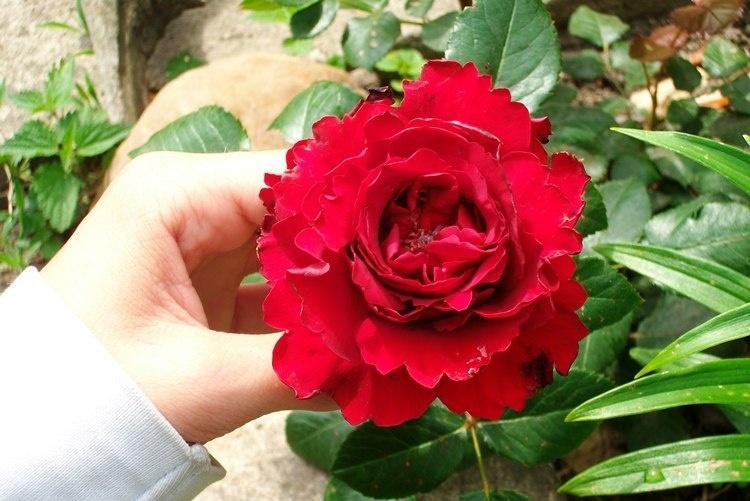 raNN_2012-03-06.jpg