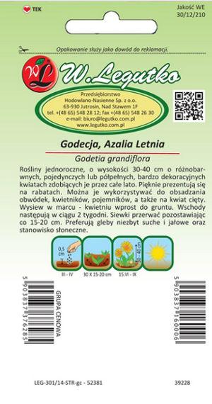Godecja-azalia-letnia-mieszanka-Legutko-1.jpg