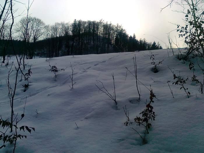 zima3.jpg
