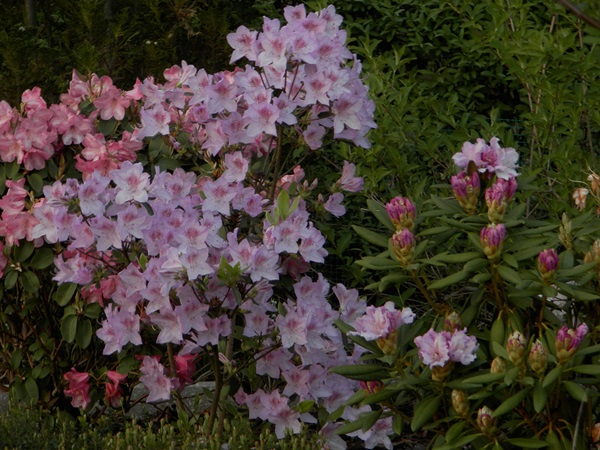P5060132-crop.jpg
