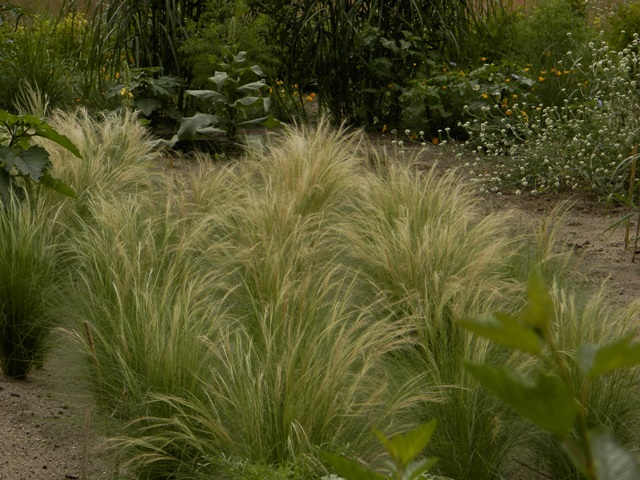 P7170128-crop-crop.jpg