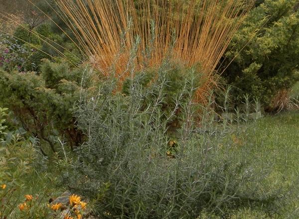 PB100041-crop.jpg