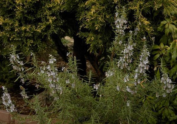 rozmary-crop_2014-12-31.jpg