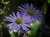 gardeniaa's Avatar